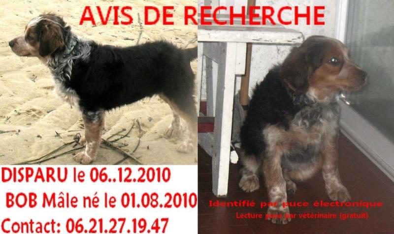 Perdu le 6/12/2010  Bob chiot 5 mois Carqueiranne (83) Avis_r13