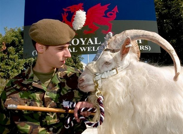 The Royal Welsh 610x111