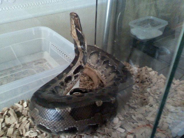 Python breitensteini 02120910