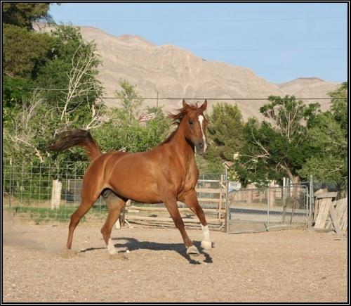 - Fiche points d'Indochine. Horse_15