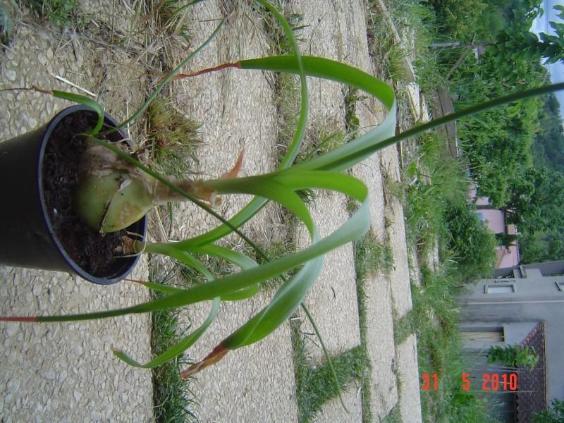 """Identification pour une plante """"verte"""" Dsc00414"""