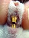 dents cassées Lili_d10