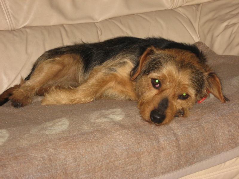 Thomy,mon chien Img_0511