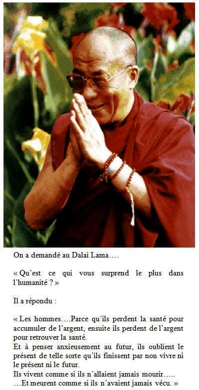 Le Zazen Dalail11
