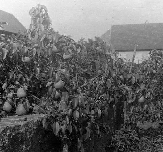 La vie au Freihof à Wangen il y a quelques années déjà..... 8710