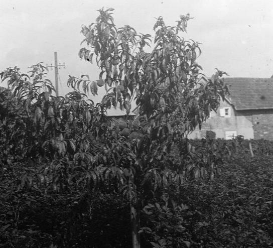 La vie au Freihof à Wangen il y a quelques années déjà..... 9211