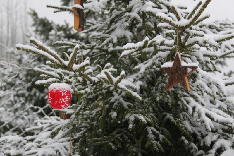 Vive la neige à Wangen ! - Page 3 Img_1047