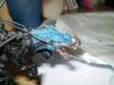 Projet : Seigneur Eldar sur Carnosaure (fini) - Page 5 P2250210