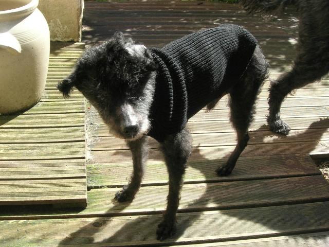 Besoin d'un tricot pour ACHILLE Achill36