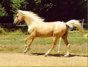 La peinture des chevaux 1346410