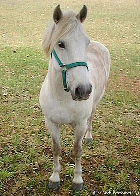 La peinture des chevaux Cheval11