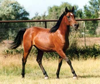 La peinture des chevaux Cheval12