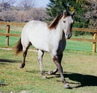 La peinture des chevaux Silver10