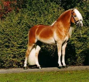 La peinture des chevaux Ujmxbz10