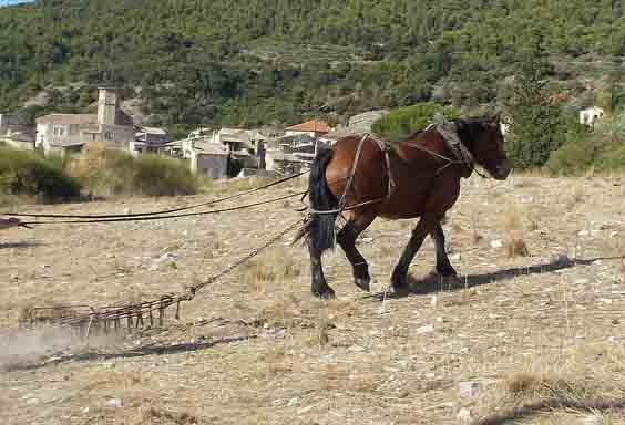 Formation à la traction animale (notamment pour entretien de pâtures) - IL NE RESTE QU'UNE PLACE 69646611