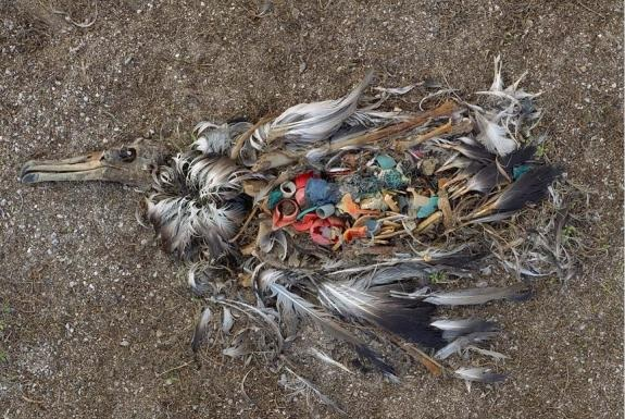 Mer de plastique du Pacifique nord (Great Pacific Garbage Patch) - Page 2 0511