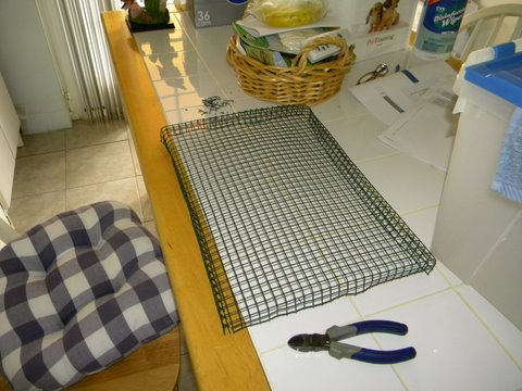making a wire bottem for baby birds in totes or other to get off the mess Bird_p10