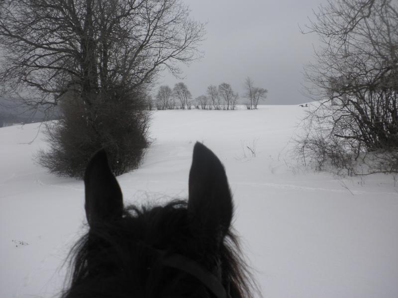 la neige, le retour 01311