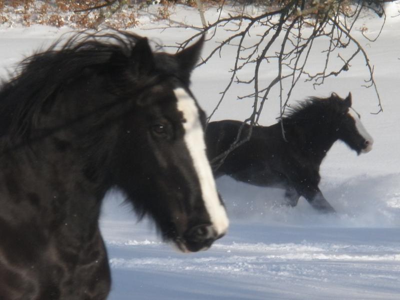 la neige, le retour 05510