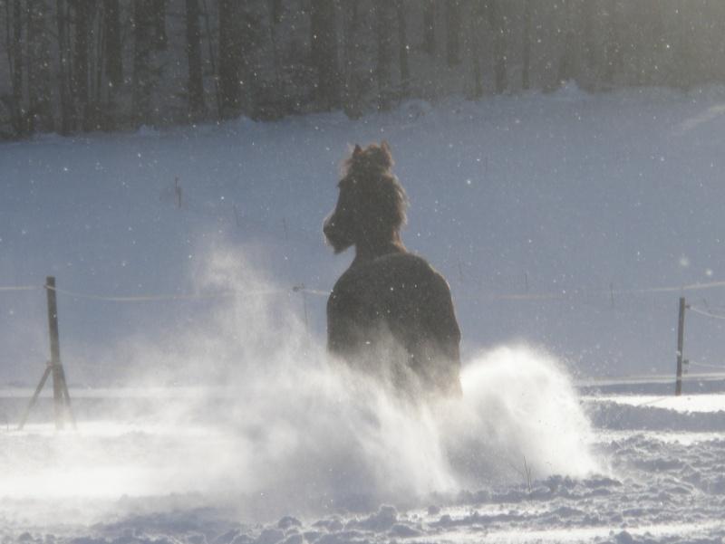 la neige, le retour 05710