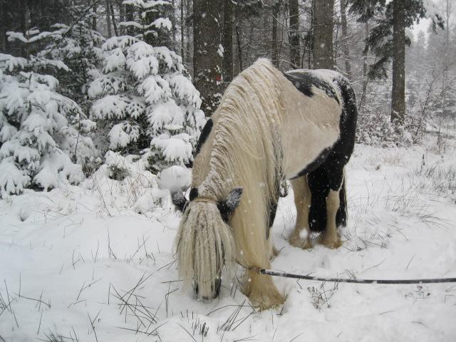 première neige 10411