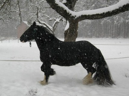 première neige 17710