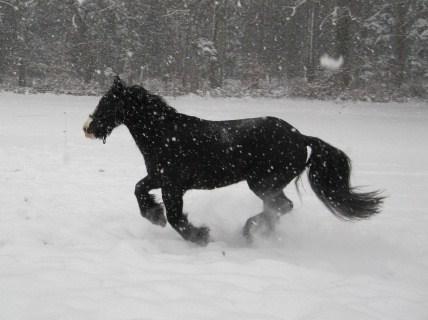 première neige 21610