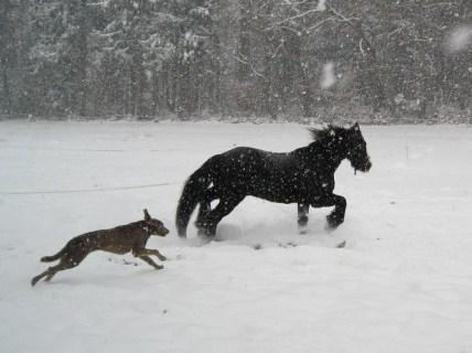 première neige 23610