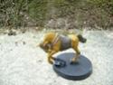 Mes chevaux du Rohan P1050412