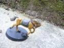 Mes chevaux du Rohan P1050413