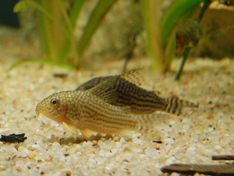 FISHROOM GEO29 Csc_0011