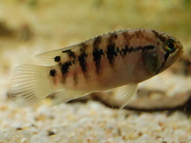 FISHROOM GEO29 Csc_0012