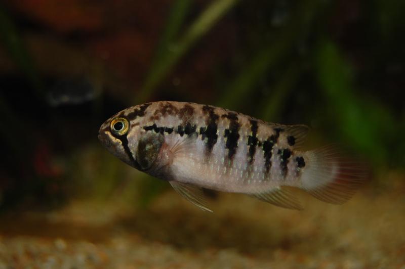 FISHROOM GEO29 Dsc_0055