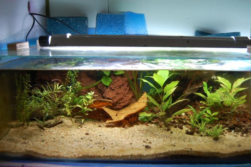 FISHROOM GEO29 Dsc_0069