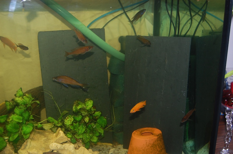 ma mini fish room Dsc_0221