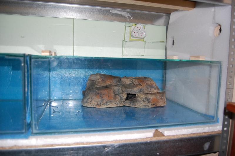 FISHROOM GEO29 Dsc_0549