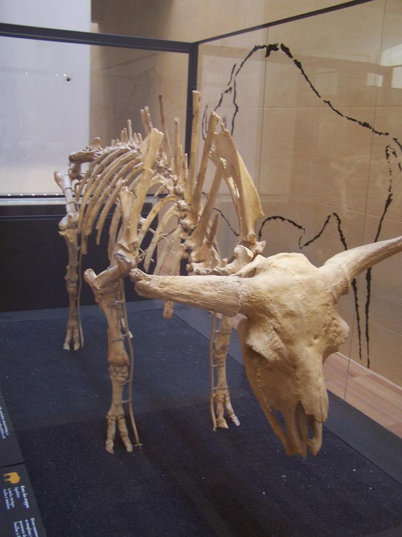 Musée de la Préhistoire - les Eyzies de tayac 100_1711