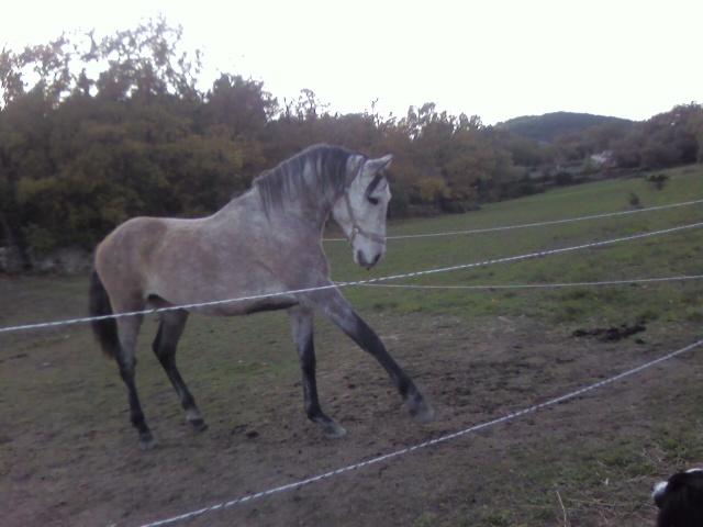 vend cheval 7ans  Photo193