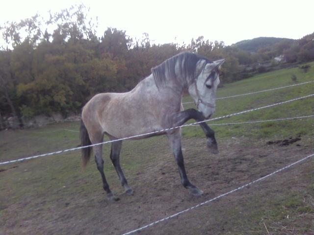 vend cheval 7ans  Photo194