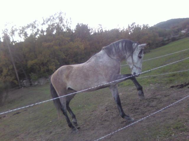 vend cheval 7ans  Photo195