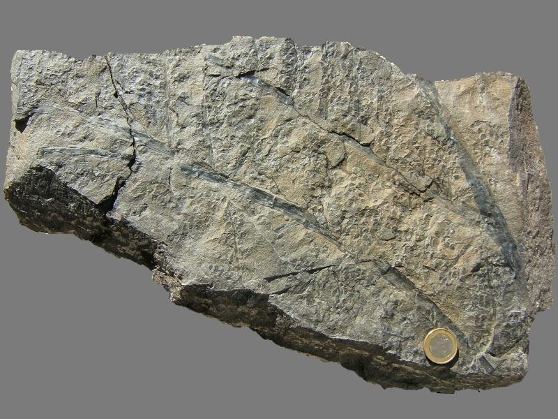 Rhodeites  Urnatopteris   017b010