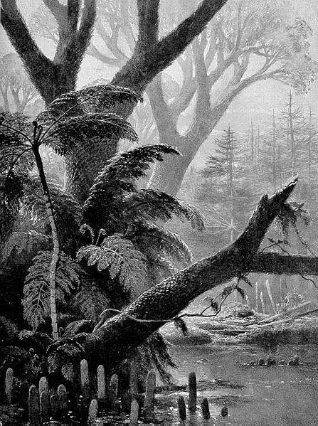 Représentation bidimensionnelle de la forêt houillère 447px-10