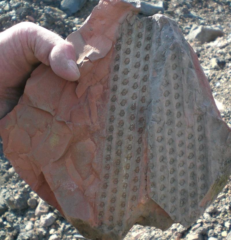 Grès (Sandstone) Schistes( Shale) types de conservation Cimg3710