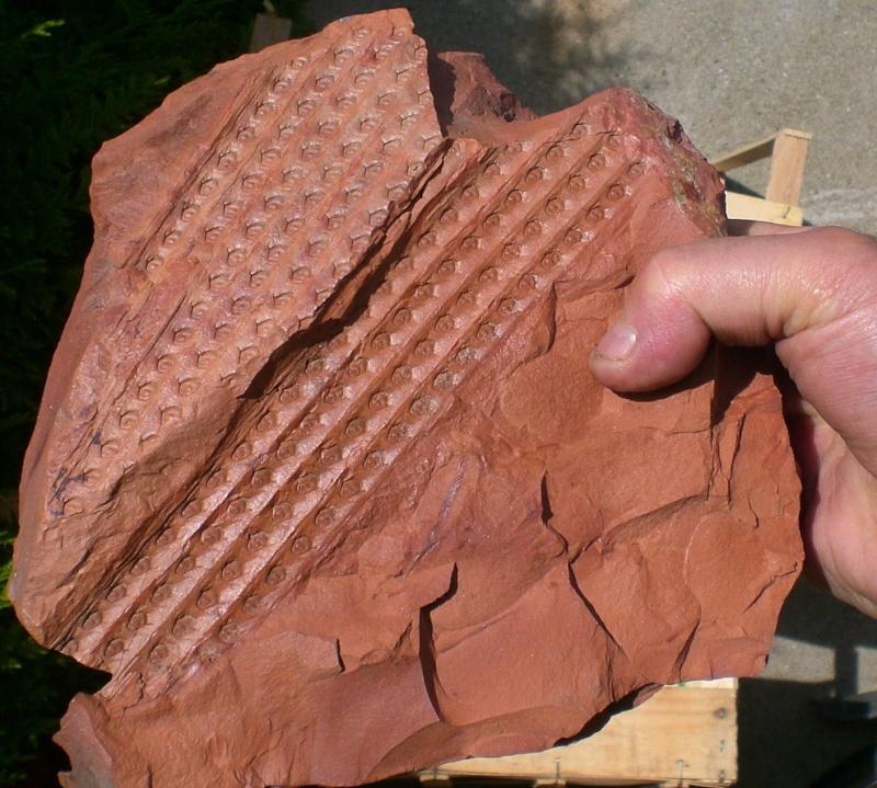 Grès (Sandstone) Schistes( Shale) types de conservation Cimg3711