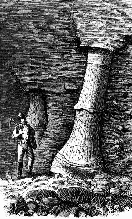 Représentation bidimensionnelle de la forêt houillère Fossil12
