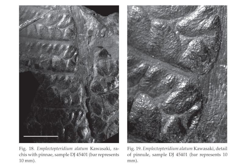Sphenopteris du Stéphanien B Get-pd10