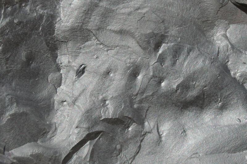 Pistes d 'arthropodes et de vers Img_2313