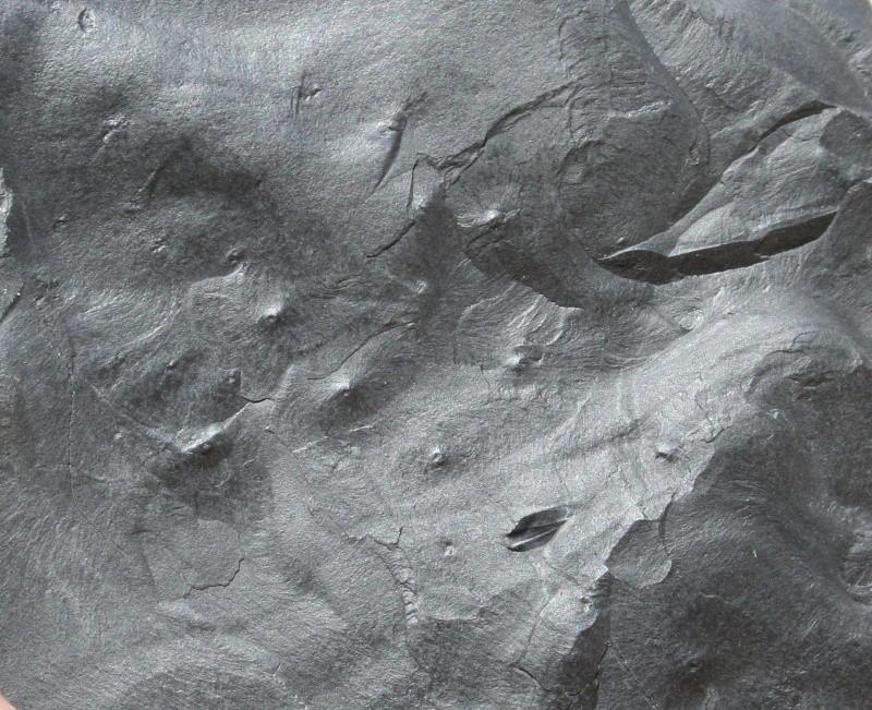 Pistes d 'arthropodes et de vers Img_2314