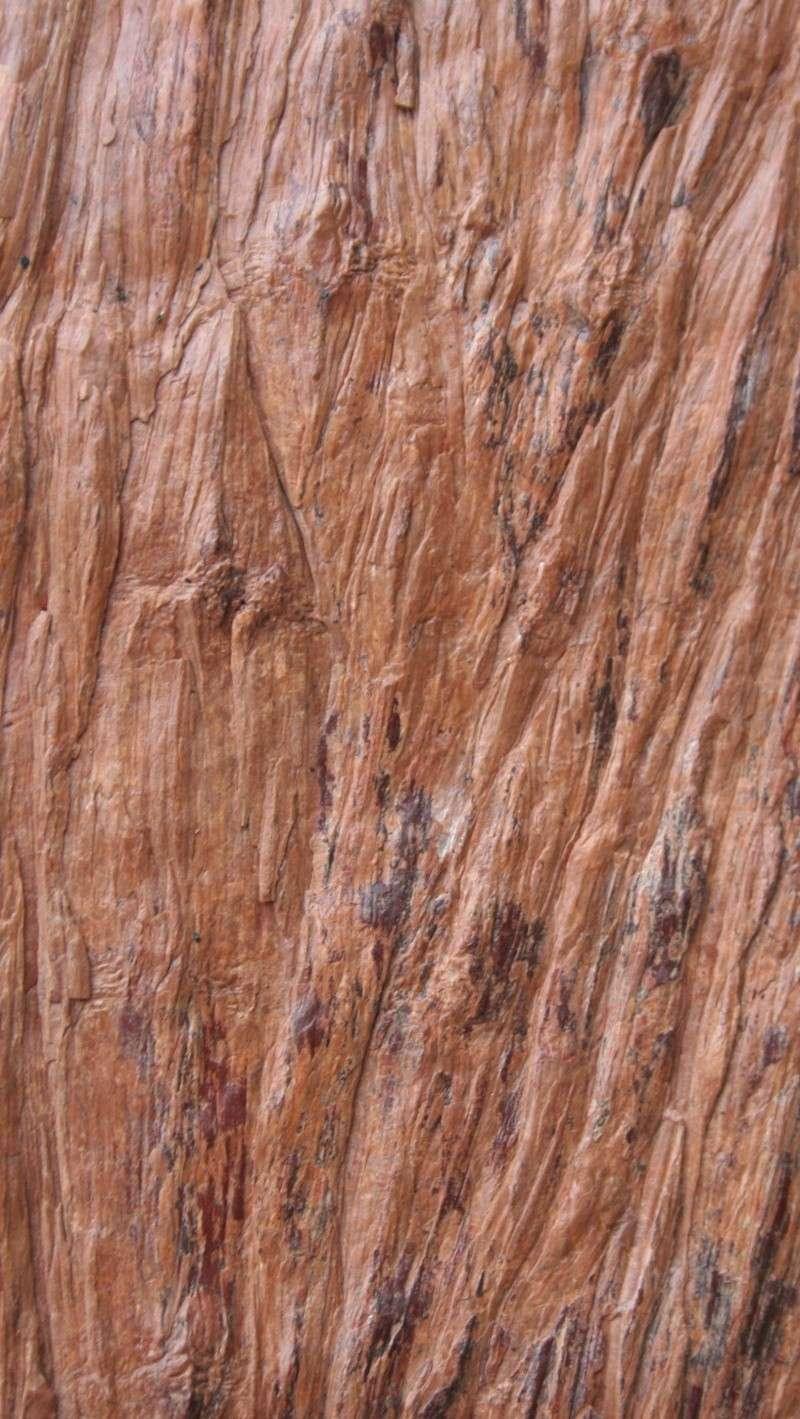 Grès (Sandstone) Schistes( Shale) types de conservation Img_3810