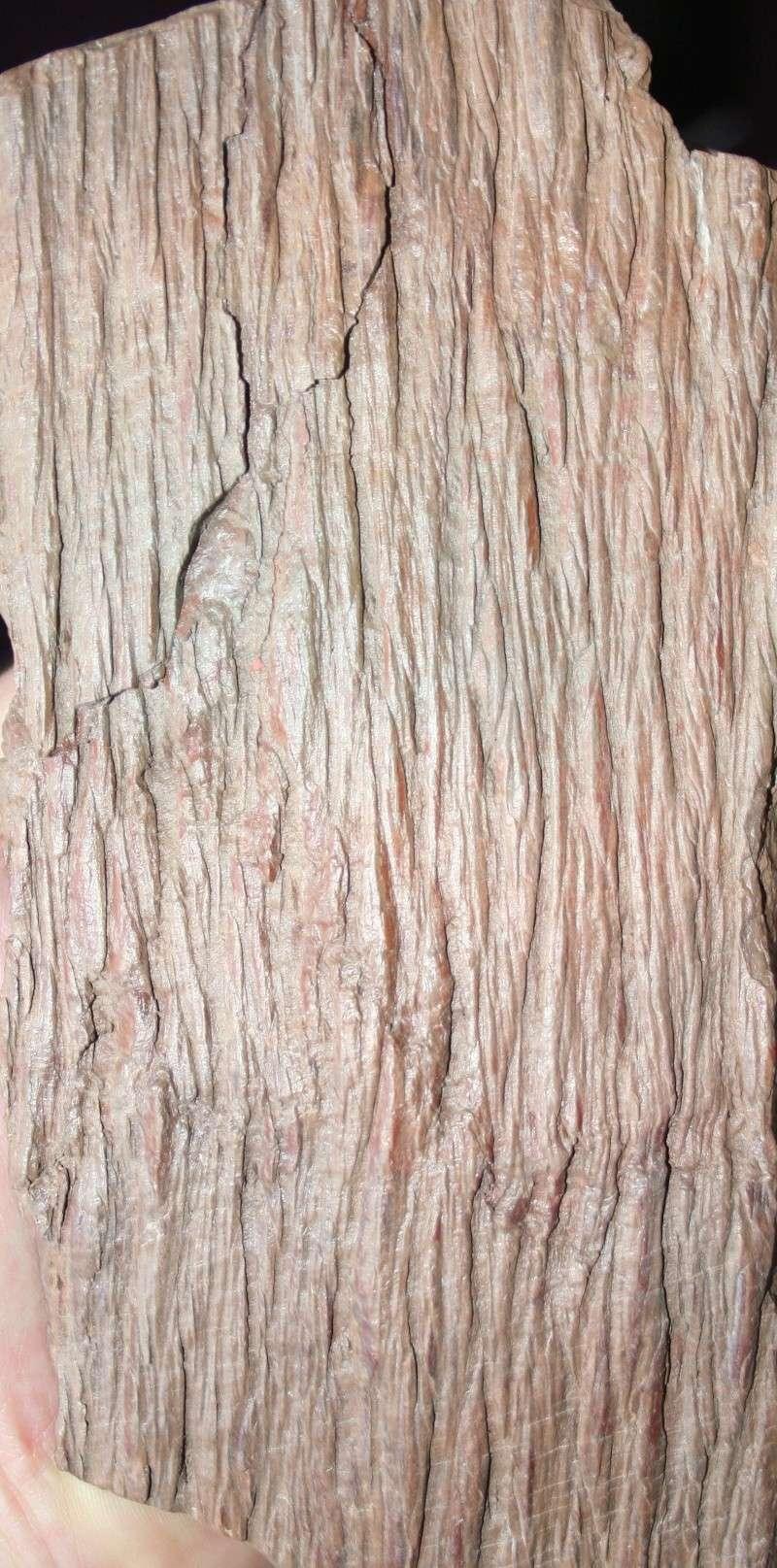 Grès (Sandstone) Schistes( Shale) types de conservation Img_4212
